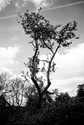 5th May 2020 - Tree