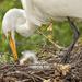 Feeding Babies by lynne5477