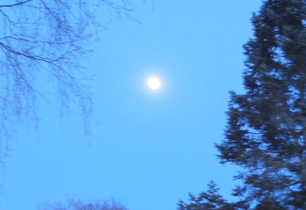 Moon by octogenarian
