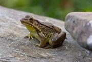5th May 2020 - LHG-4380- Froggy