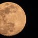 Tonight's Moon! by rickster549