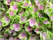 28th Jan 2020 - Floral