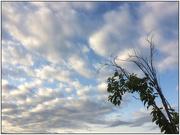 29th Jan 2020 - Morning Sky