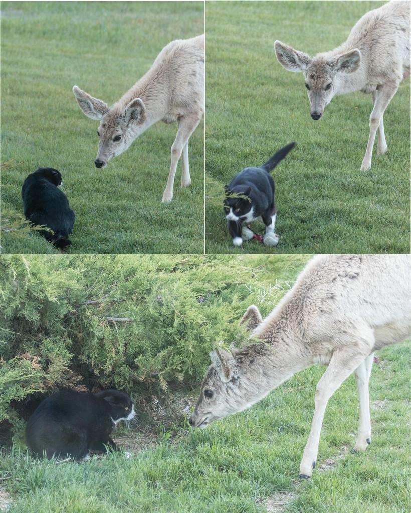 cat meets deer by aecasey