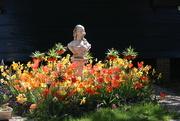 3rd May 2020 - May 3, Garden