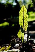 7th May 2020 - Leaf