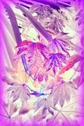 7th May 2020 - Leaf Patterns