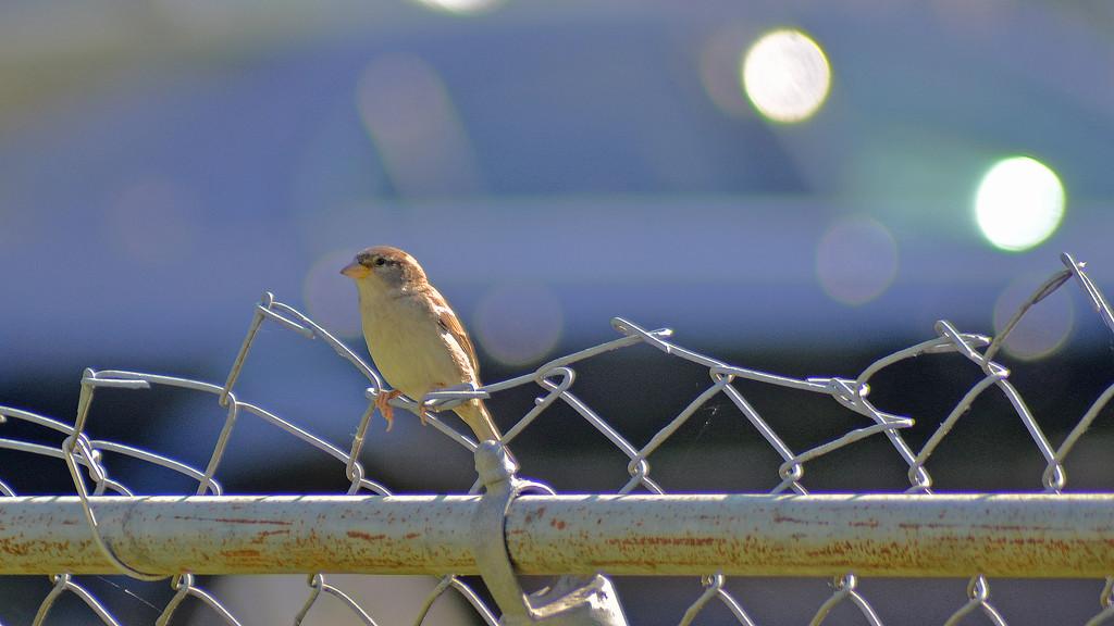 Bird on a Wire. by dmdfday