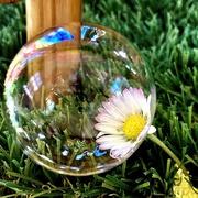 7th May 2020 - Bubble daisy
