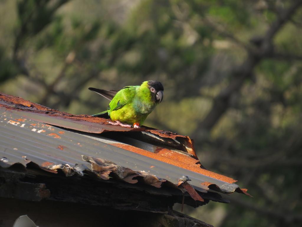birdie by kali66