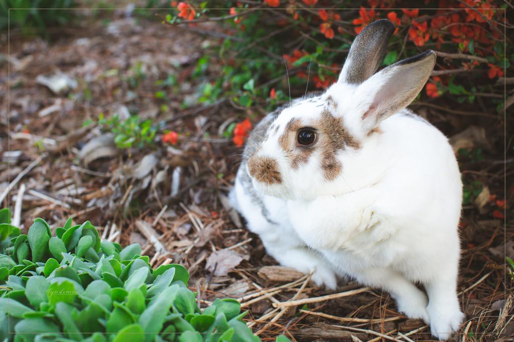 Brenna Bunny by lyndemc