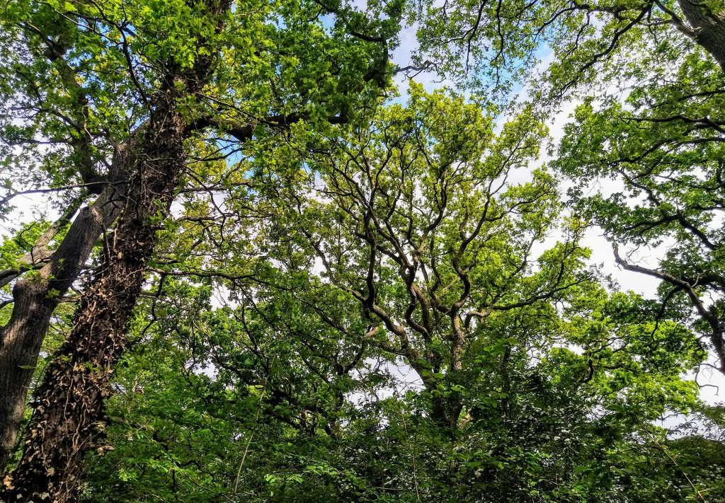 Ainslie Wood canopy by boxplayer