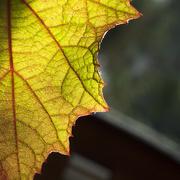 8th May 2020 - Autumn Sunlight