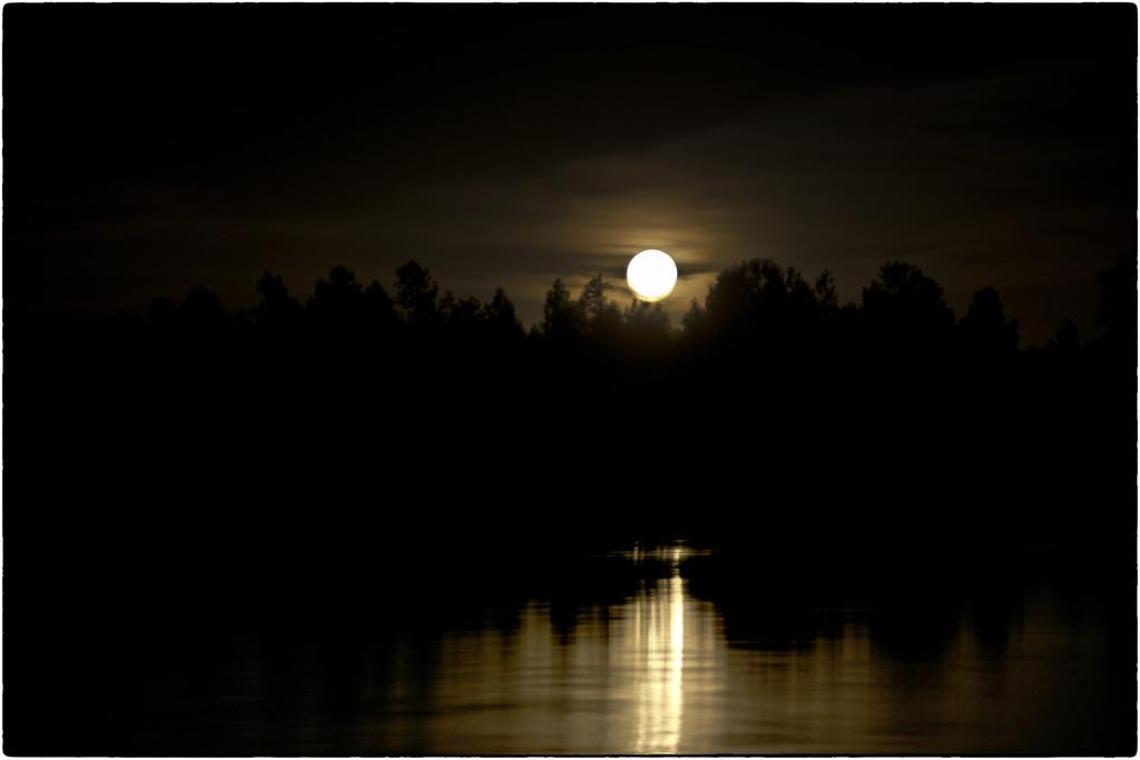 Flower Moon rises by joysabin