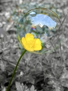 8th May 2020 - Loving this bubble photograghy