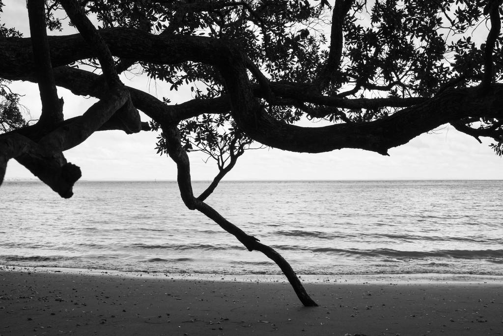 French Bay by brigette
