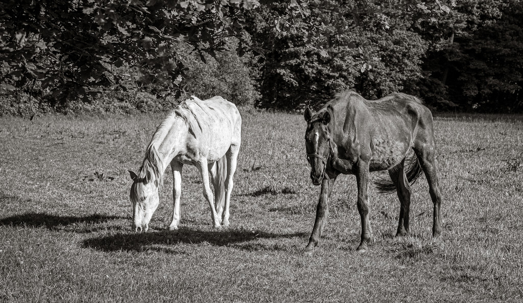 Old Retired Horses... by vignouse