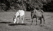 8th May 2020 - Old Retired Horses...