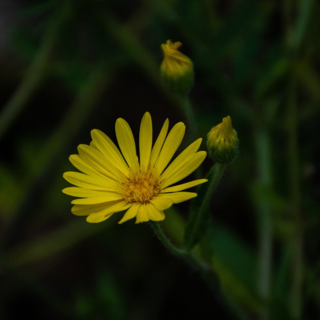 Late afternoon flower... by thewatersphotos