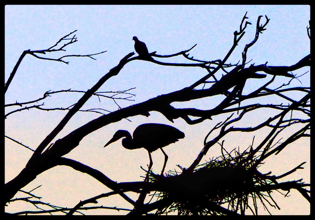 Heron & Dove by redy4et