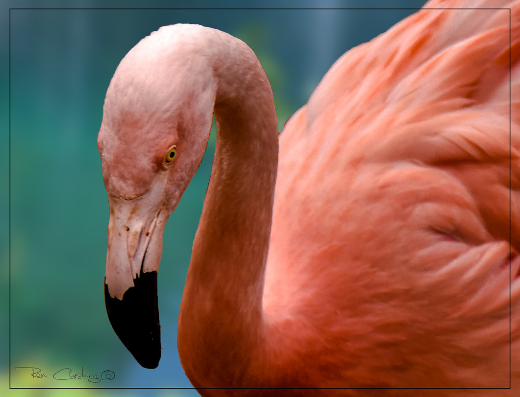 Flamingo Friday '20 11 by stray_shooter