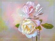 9th May 2020 - Roses