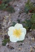 9th May 2020 - May 9, Flower