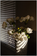 21st Feb 2020 - White Flowers