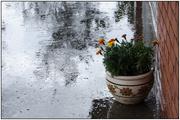 23rd Feb 2020 - Wet Day