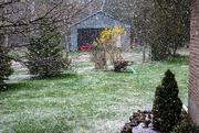 8th May 2020 - Snow on May 8th