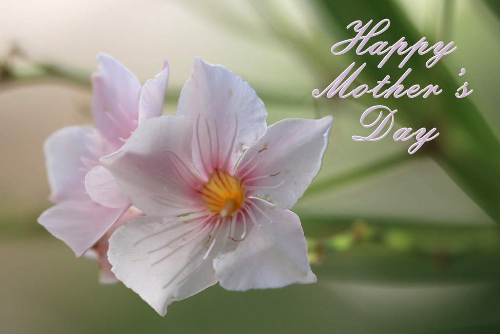 Happy Mother's Day...  by ingrid01
