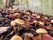 11th May 2020 - Mushrooms pancakes.