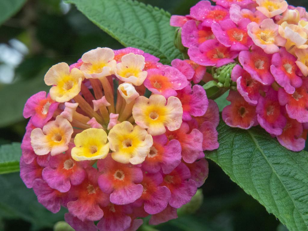 Mothersday flower by ianjb21