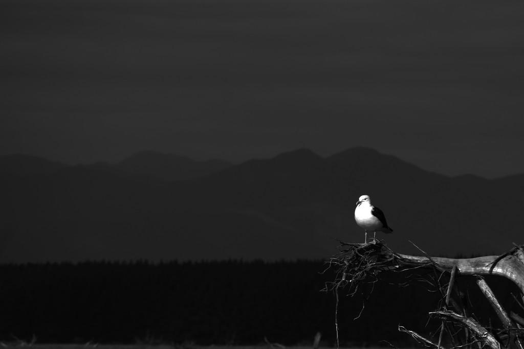 Seagull by suez1e