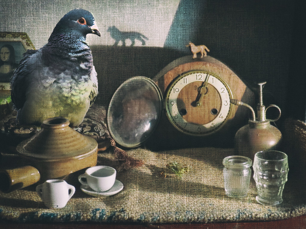 pigeon not so still life  by kali66