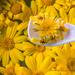 Yellow daisies by mv_wolfie