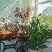 Indoor Garden by pej2