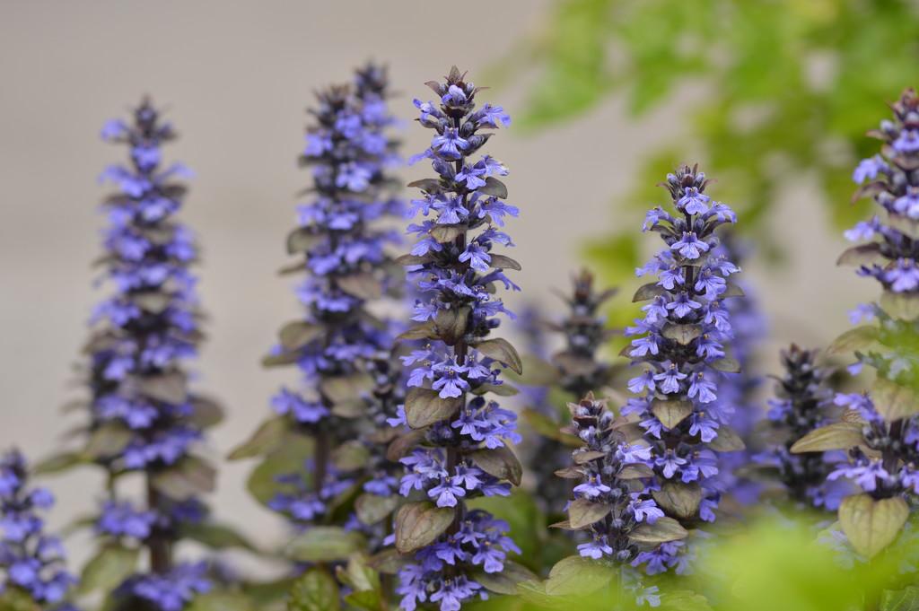 Garden colour by gemmabrowne