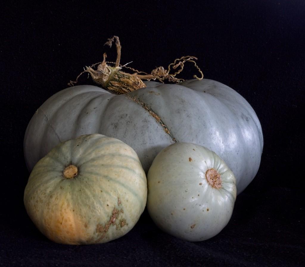 A harvest of pumpkins by kiwinanna