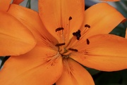 13th May 2020 - Orange