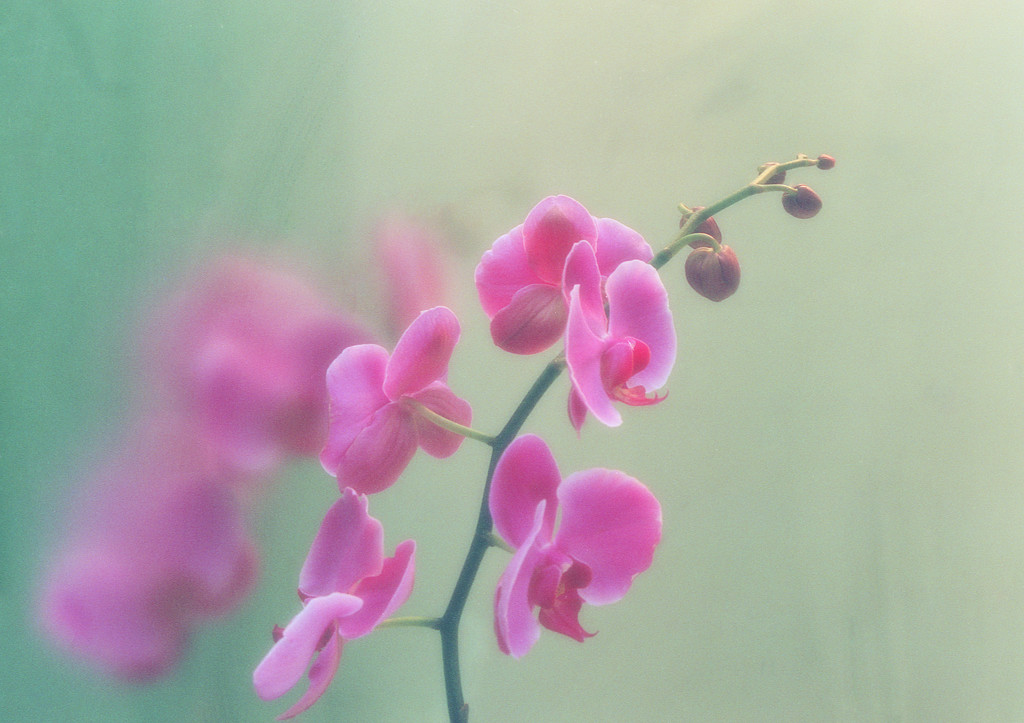 Orchids in steam by joysabin