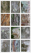 13th May 2020 - Tree Bark Collage