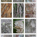Tree Bark Collage by onewing