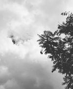13th May 2020 - Gloomy day