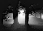 12th May 2020 - Fog