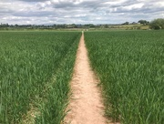 13th May 2020 - Crossing the field