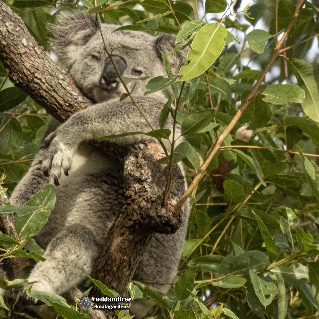 Ash is half back by koalagardens