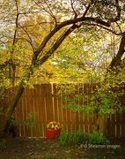 13th May 2020 - Backyard Gold