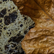 14th May 2020 - Autumn Leaf Embracing Rock