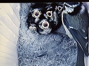 14th May 2020 - Feeding time in the nest